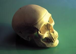 Hur man gör en skalle skulptur