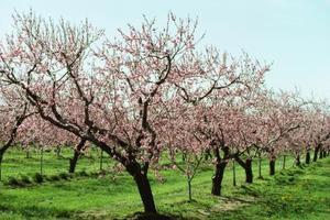 Orchard Mason Bee kapsling Box