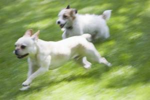 Finns det gräsfrö som du kan använda att hundar inte kan skada och kommer inte att skada dem?