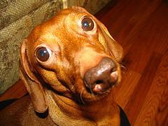 Tecken på lymfom hos hundar