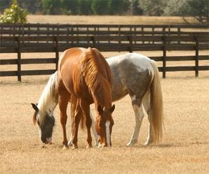 Sommarläger för lärande om hästar för barn i Illinois