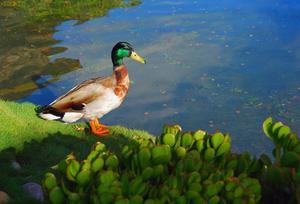 Fysiska egenskaper av sötvatten Biome
