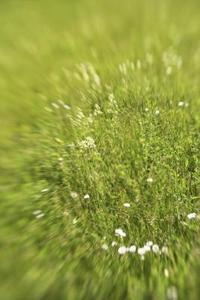 Vind-pollineras växter