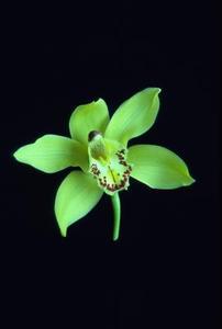Ovanligt snabbt växande ettåriga växter