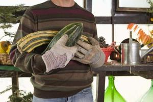 Hur man plantera & växer Squash