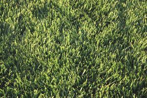Lawn care vattning tips