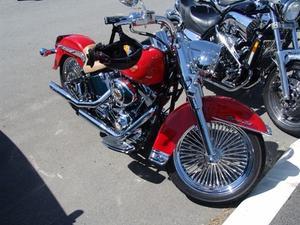 Hur justera Harley Rear motorcykel chocker