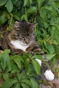 Örter för att avskräcka katter