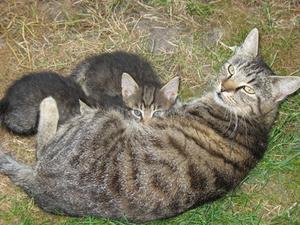 Blödning efter graviditet