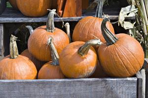 Vilken tid på året du plantera pumpakärnor?