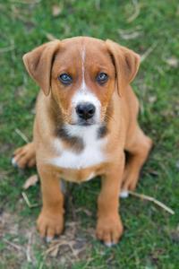 Homeopatiska utslag salvor för hundar