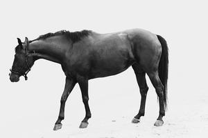 Hur man lär en häst ögat anatomi