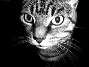Beslag i äldre katter