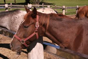 Equine kolik rättsmedel