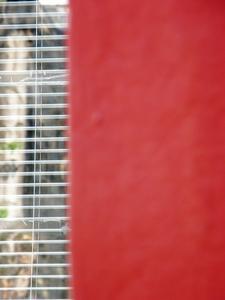 Hur man kan inreda ett sovrum med röda väggar