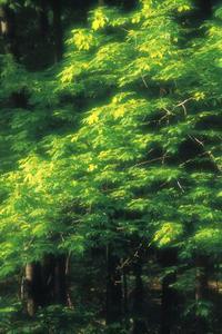 Identifiering av Box äldre träd som man eller kvinna