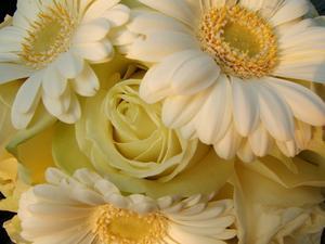 Hur man gör siden brudbuketter med gerbera daisies