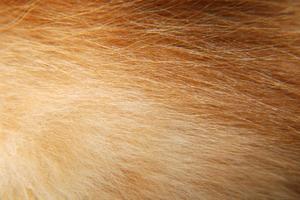 Vad göra för dubbla blekt & ljus Orange hår