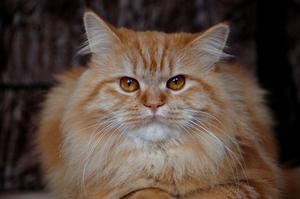 Kan krukväxtjord jord gör katter sjuka?