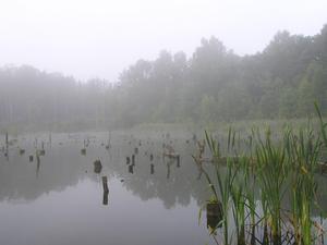 Vad är mänsklig påverkan på sötvatten biome?