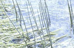 Hur du dra ut ogräs i en sjö