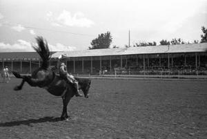 Hur till stopp en häst från Bucking när i sadeln