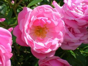 Preplanned blomma trädgård idéer