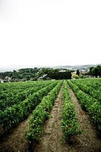 Proffsen & nackdelar med genetiskt modifierade livsmedel