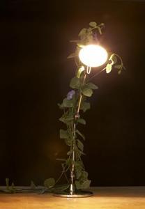 Färgen på ljuset påverkar hur lång en planta växer?