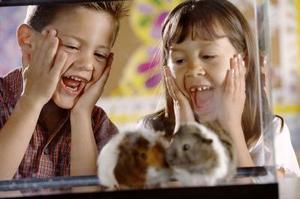 Hur att skilja mellan en Hamster kampen & Hamster spela