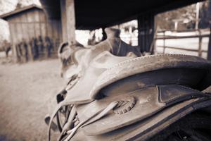 Gypsy hästar Temperament