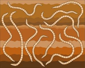 Hur man startar en kommersiella worm gård