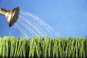 Vilken effekt har vatten på växter?