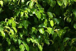 Det bästa inomhus träd & växter