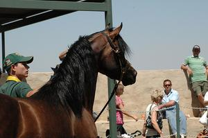 Equine Metabolic syndrom prognos
