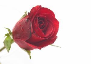 Hur man drar blommor och rosor