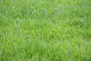 Den bästa tiden på året att så gräs utsäde