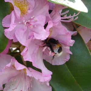 Färgglada blommor för nya England trädgårdar som gillar skugga