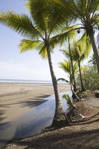 Steg för steg Guide till ritning palmer