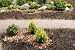 Växtskydd för smaragd gröna tuja