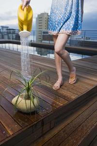 Växter växer bättre i saltvatten socker vatten eller kranvatten?
