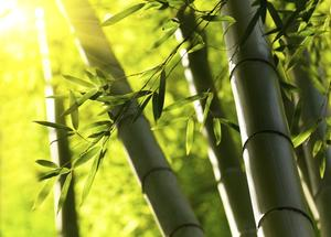Hur man gör bambu växer snabbare