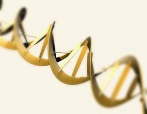 Vad är några kännetecken av DNA?