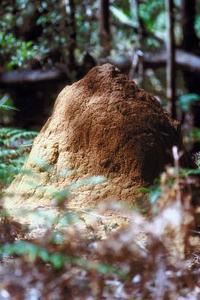 Hur man dödar termiter utan bekämpningsmedel