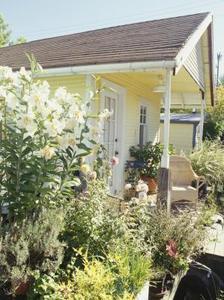 Hur man odlar en Cottage Garden kantlinje