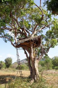 Trädet hus byggnad instruktioner