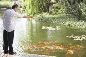 Hur man stoppar hägrar från att ta fisk från dammen