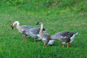 Hur kan man förhindra fåglar från att äta dina gräsfrö