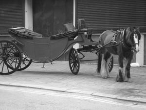 Hur behandlades hästar i England runt 1900-talet?