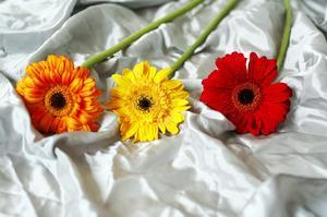 Hur man köper silke blommor Partihandel